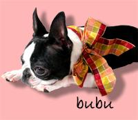 bubu1.jpg